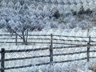 """Chain Orchard"" by Ann Douglas"