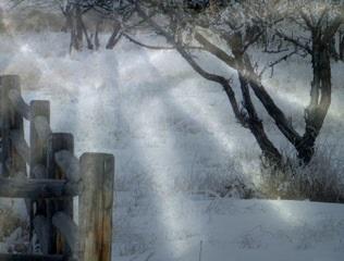 """Light Orchard"" by Ann Douglas"