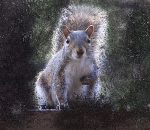 close up of squirrel amid paint splattered background